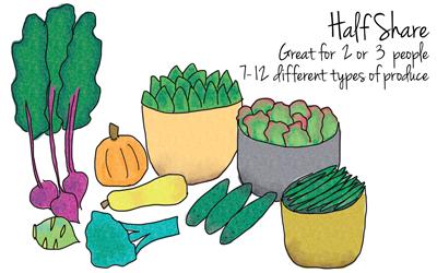 mary-kitchen-gardens-half-csa-share